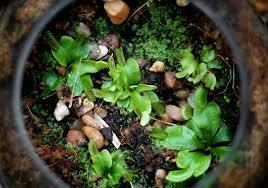 terrarium terrariums diy how to diy terrarium glass terrarium green