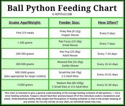 Ball Python Size Chart Ball Python Feeding Chart Ball Python Pet Snake Python