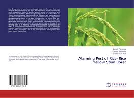 search results for ankush chormule bookcover of alarming pest of rice rice yellow stem borer