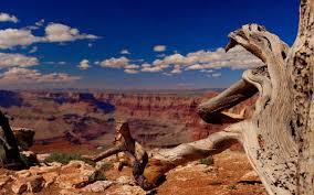 free grand canyon high quality wallpaper id 45013 for hd 1440x900 pc