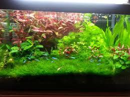 Reefitalia la vasca di ekinodorus