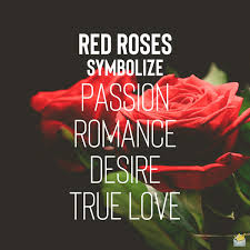rose color meanings 10 1 symbols of