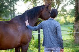 De Aard Van Het Paard Anderhalfpk