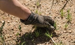 Image result for pulling weeds