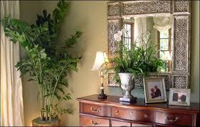 لنباتات الزينة