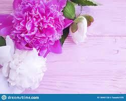 Beautiful Flower Summer Peony Birthday Romantic On Pink