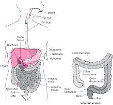 Panoramica Sullano E Sul Retto Disturbi Digestivi Manuale Msd