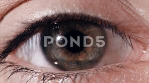 How Do Eyes React To Light Eye Pupil Reaction To Light Humans Eye Macro Shot With