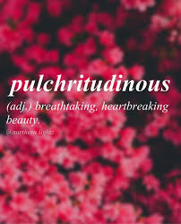 beautiful words the english language should steal beautiful i came across this word a while ago actually i was writing something and trying to another word for beauty sooo yeah