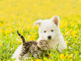 2,121 Dog Cat Spring Photos - Free & Royalty-Free Stock Photos from Dreamstime