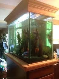 aquarium for office. Office Fish Tank Hire Aquarium Oak Trim Work Tropical For E