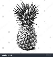 pineapple drawing. pineapple drawing s
