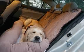 comfortable car travel with your dog