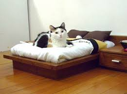 cat safe furniture. Cat-furniture-112 Cat Safe Furniture -