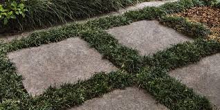 how to grow mondo grass between pavers