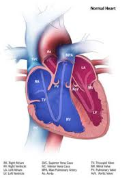 Cardiac Anatomy Chart Congenital Heart Defects How The Heart Works Cdc