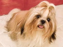 cute dog wallpaper cute happy dogs