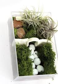 indoor fairy garden. Make A Beautiful And Simple Easy Indoor Fairy Garden Terrarium! You\u0027ll Want To