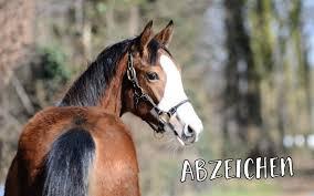 Wissen über Pferde Archive Seite 2 Von 3 Pferdeliebe Das Magazin