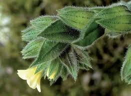 Flora vascolare alloctona e invasiva delle regioni d'Italia