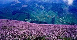 Road trip from Alappuzha to Cochin | Neelakurinji Flowering area | Bloggers  Experience