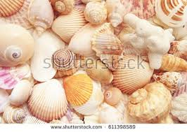 sea shells collection colorful seashells and coral as background sea shells collection