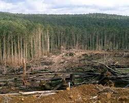 Otway Ranges Environment Network