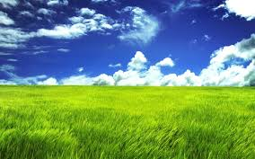 green grass field animated. Green Grass Field Animated