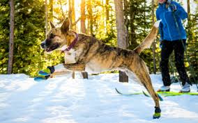 Qumy Dog Boots Size Chart The 14 Best Dog Boots Reviewed In 2019 Dogviously