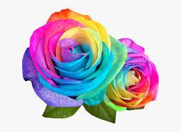 rainbow multicolor flowers colour