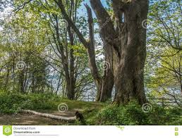 Dash Point Wa Tide Chart Trees At Dash Point Stock Image Image Of Green Dash 70451309