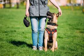Personal <b>Protection Dogs</b>: Personal <b>Protection Dog Training</b>