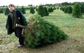237 Best Christmas Tree Farm Images On Pinterest  Christmas Tree Christmas Tree Cutting Nj