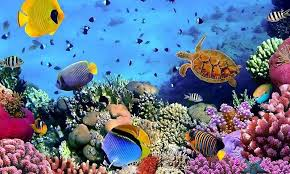 3d hd live wallpapers. Delighful Live 3D HD Live Fish Wallpapers Screenshot 24 With 3d Hd M