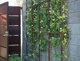 metal wall trellis wall mounted trellis metal new wall trellis ideas amazing metal garden trellises 1 metal wall trellis metal garden