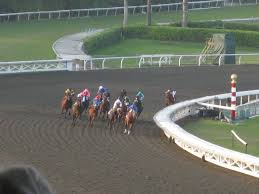 Breeders Cup Charts 2010 2009 Breeders Cup Classic Wikipedia