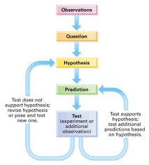 Scientific Method Flow Chart Hypothesis Based Science