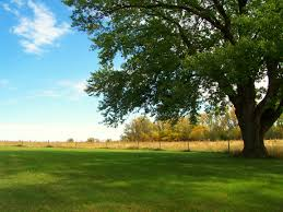 Image result for shade tree