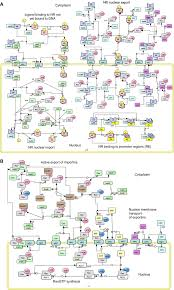 collection network diagram standards pictures   diagramsfigure  a b network diagram for gr signaling the nr signaling