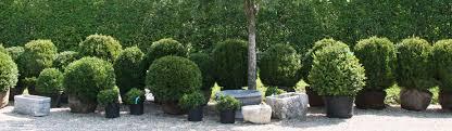 Boxwood Cultivars Ajf Design