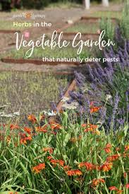 mix herbs and vegetables in the garden to deter pests naturally
