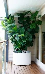 Large indoor planters 2