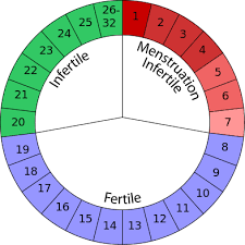 Typical Menstrual Cycle Chart Menstrual Cycle Read Biology Ck 12 Foundation