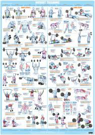 Workout Chart Weight Training And Bodybuilding Exercise Poster Barbell And Dumbbell Gym Chart