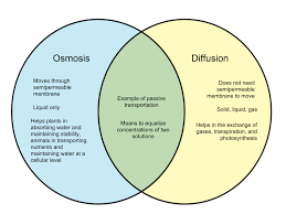 Venn Diagram Diffusion And Osmosis Difference Between Osmosis And Diffusion Whyunlike Com
