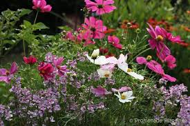 Small Picture Download Cottage Garden Flowers Solidaria Garden