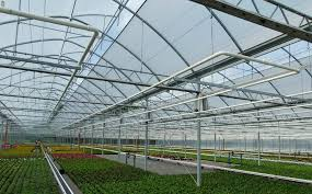 screen installations in foil greenhouses at ruba baers in kevelaer germany