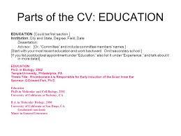 University Resume Template  resume examples essay dissertation     aploon
