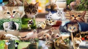 cats collage wallpaper. Delighful Wallpaper Cat Collage Throughout Cats Wallpaper C