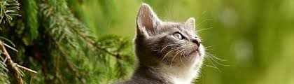 indoor plants that are safe for cats to